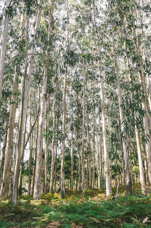 Foto d'estoc gratuïta de arbres, natura
