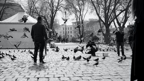 Základová fotografie zdarma na téma dav, dítě, dospělý, holub
