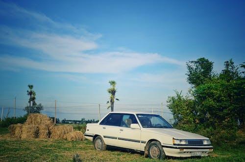 Darmowe zdjęcie z galerii z droga polna, gospodarstwo, piękny, stary samochód