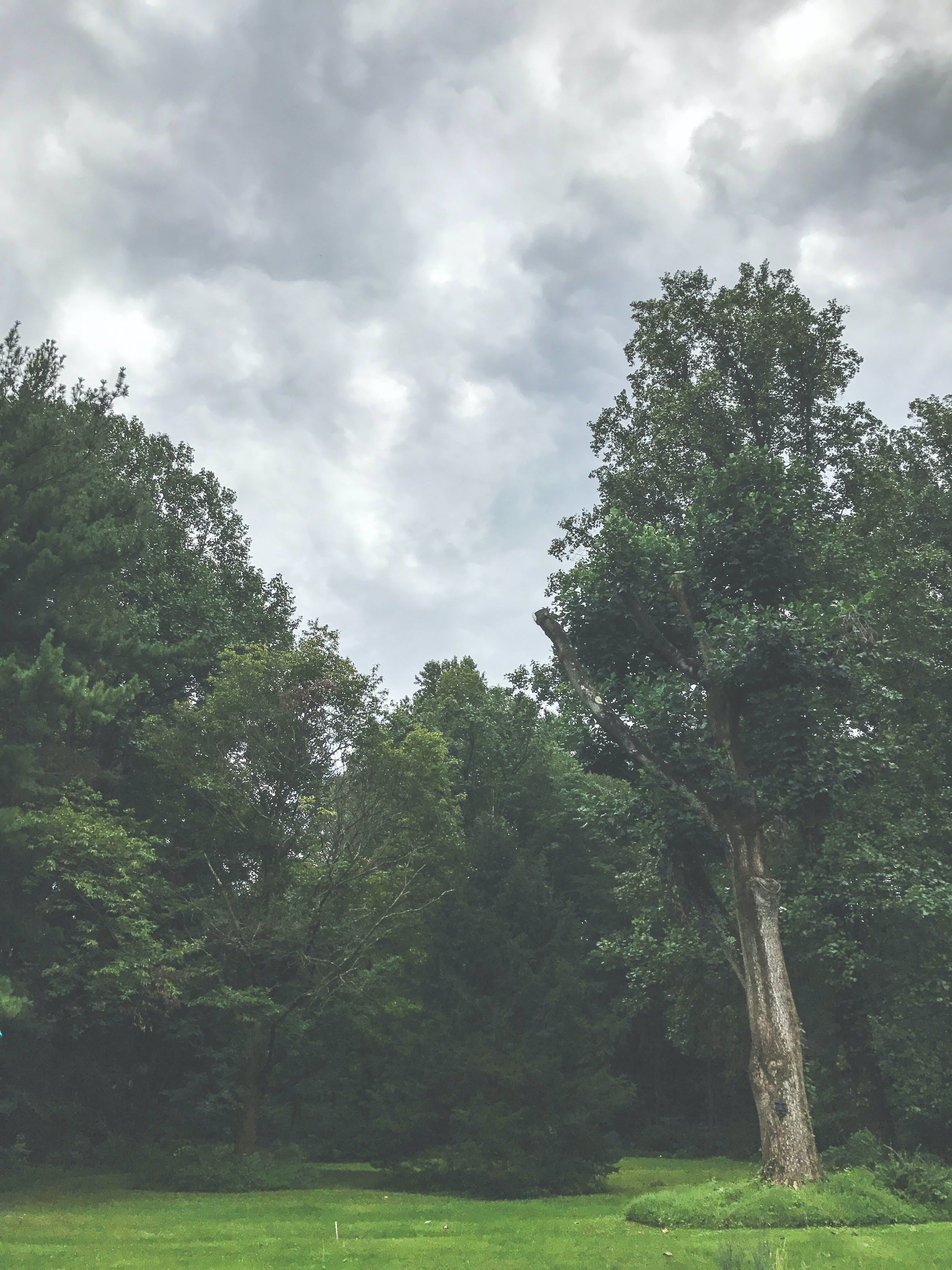 Green Trees Under the Cloudy Sky