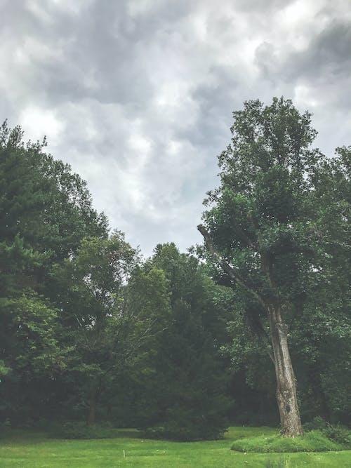 Foto d'estoc gratuïta de alba, arbres, bosc, boscos