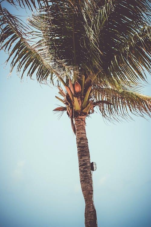 Ingyenes stockfotó fa, napfény, pálma, pálmafa témában
