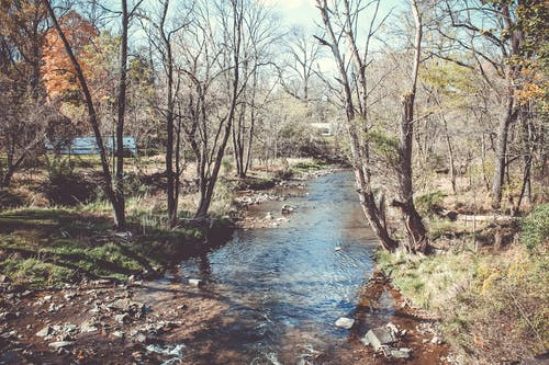 Fotos de stock gratuitas de bosque, bosque otoñal, fotografía de naturaleza, madre naturaleza