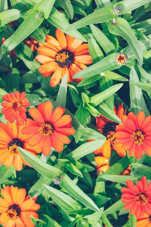 Fotos de stock gratuitas de flores bonitas, fotografía de naturaleza, jardín, jardín de flores