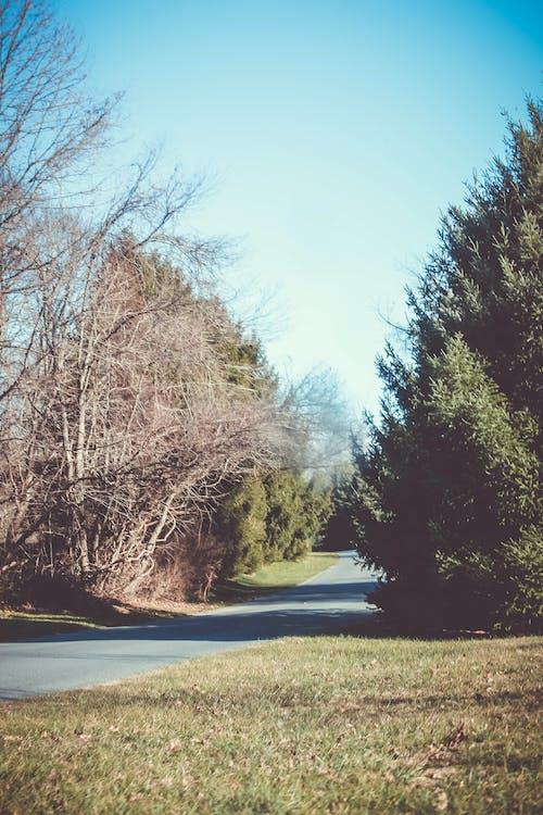 Kostnadsfri bild av blå himmel, buskar, klar himmel, natur park