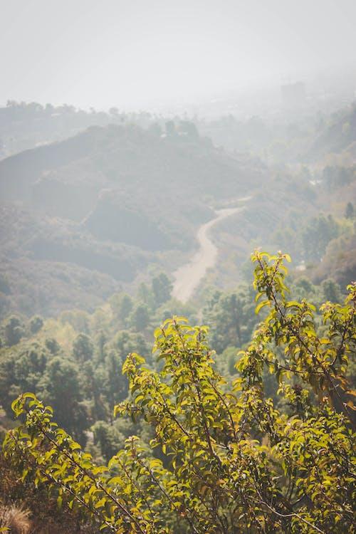 Kostnadsfri bild av buskar, buske, moder natur, natur park
