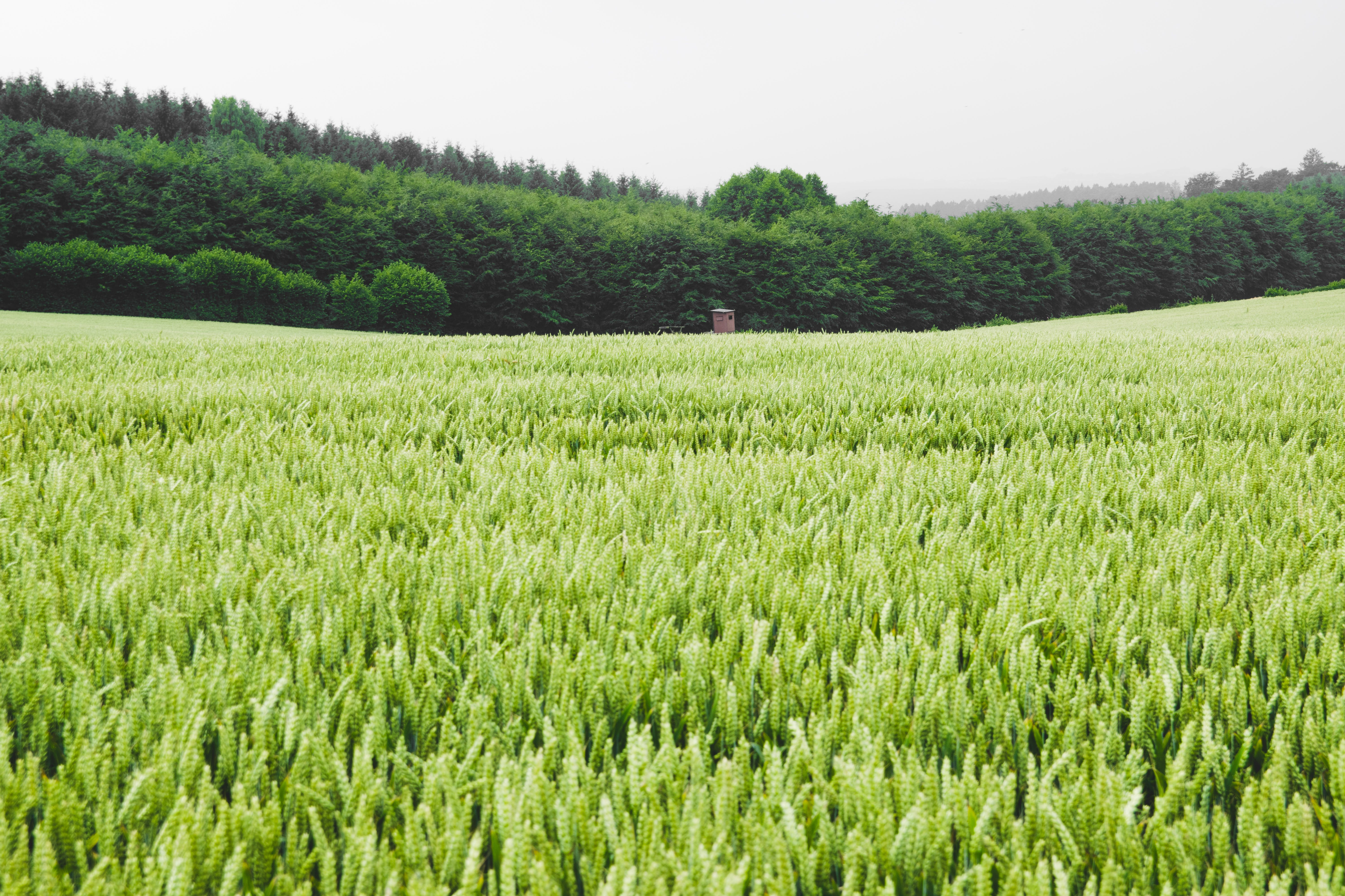 Green Leafed Grass Field