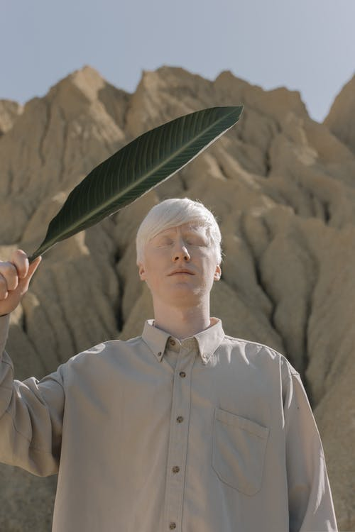 Foto stok gratis albino, bidikan sudut sempit, daun hijau