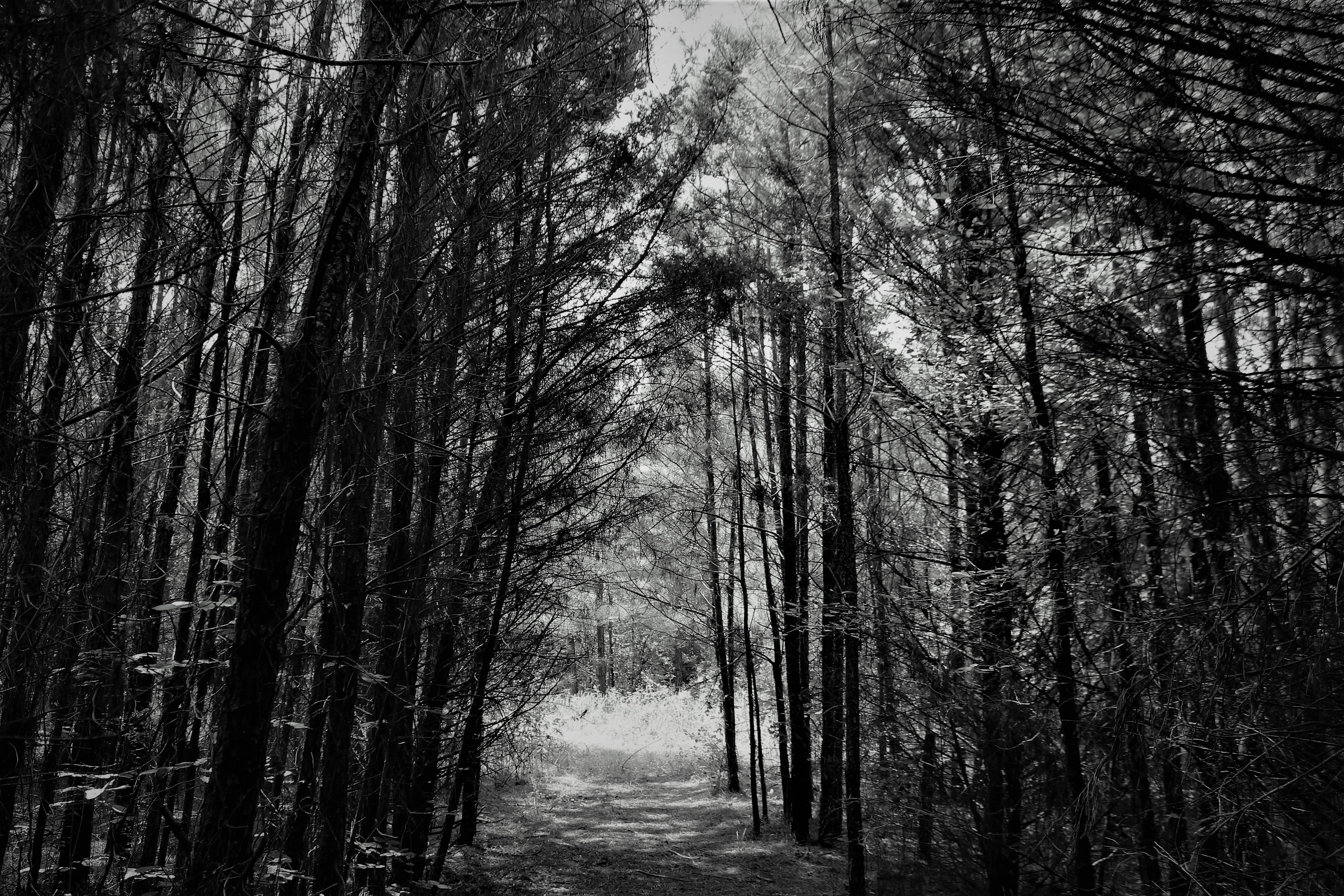 Greyscale Photo of Forest Pathway