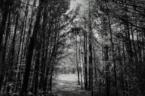 モノクローム, 小径, 影, 木の無料の写真素材