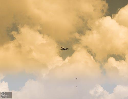 Free stock photo of aeroplane