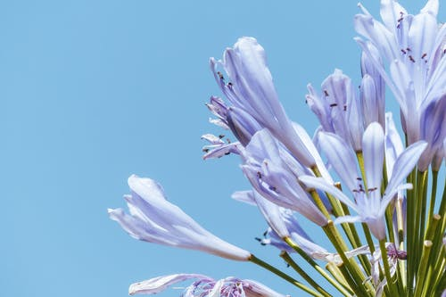 Delicate flowers with purple petals on green stems growing on bright blue background