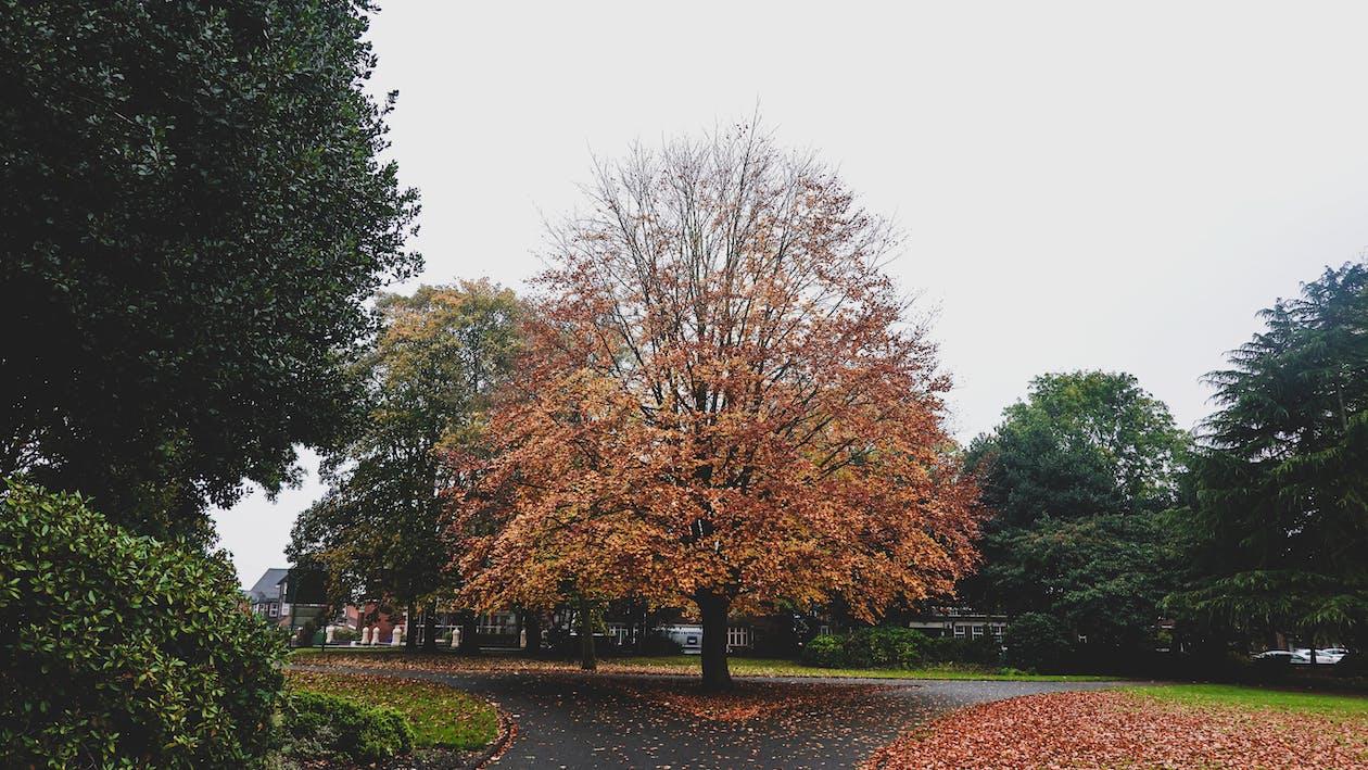 Brown Leaf Trees on Park