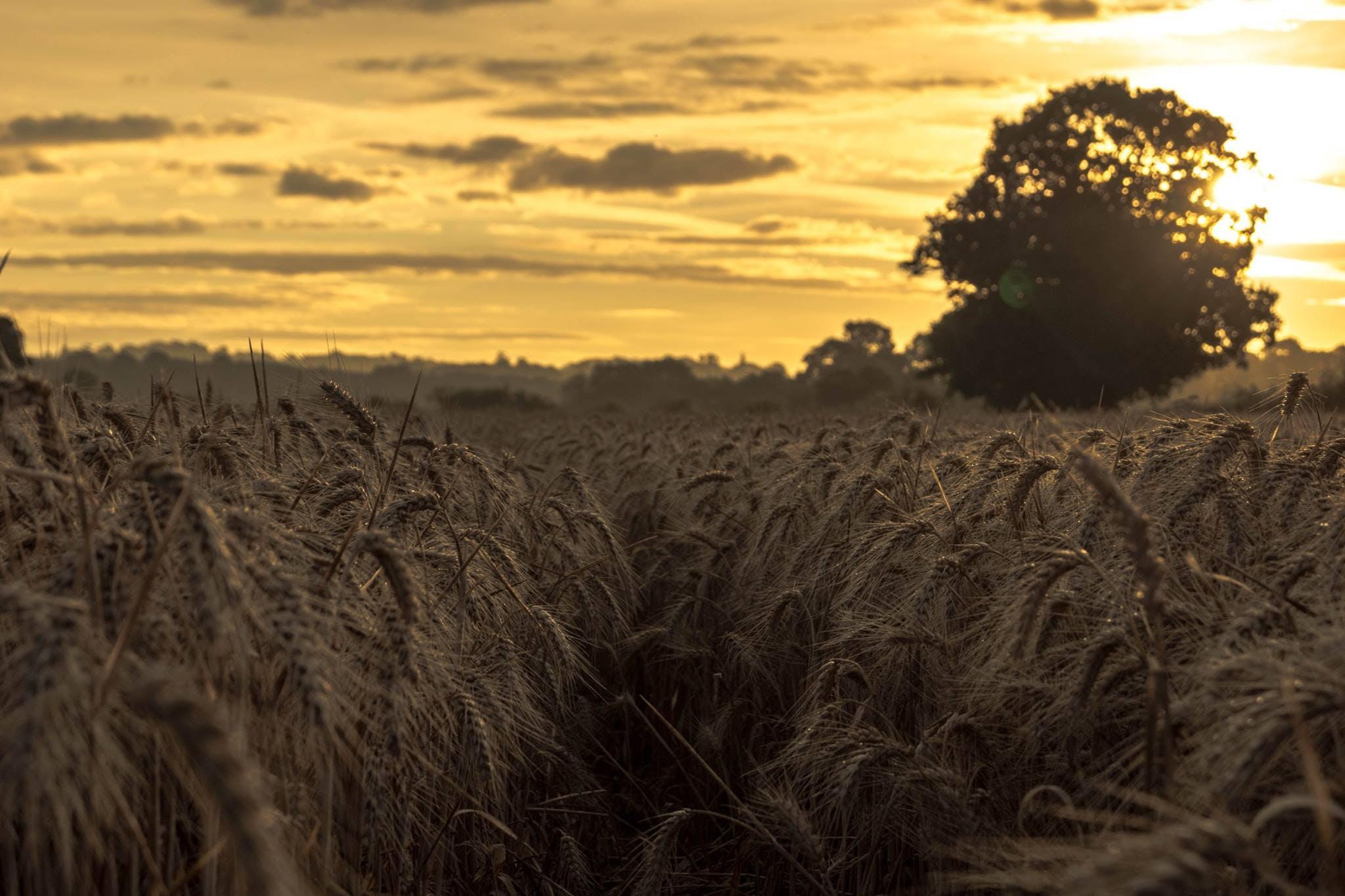 View of Grass Under Golden Hour