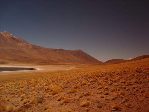Fotos de stock gratuitas de aislado, arbustos, Desierto, montañas