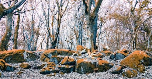Ilmainen kuvapankkikuva tunnisteilla appelsiini, barna, galway, kivet