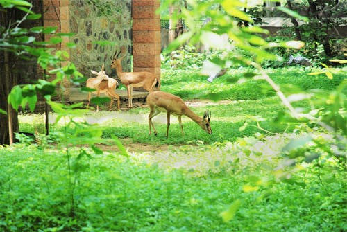 Photos gratuites de animal, animaux, cerf, clairière