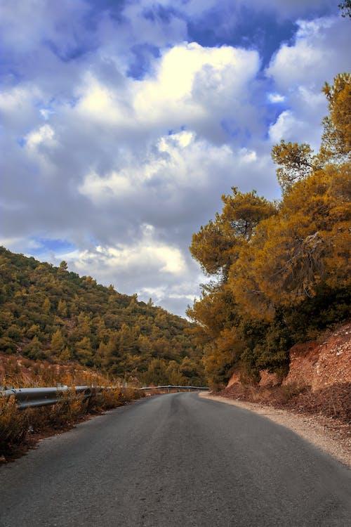 Free stock photo of asphalt, autumn, jerash