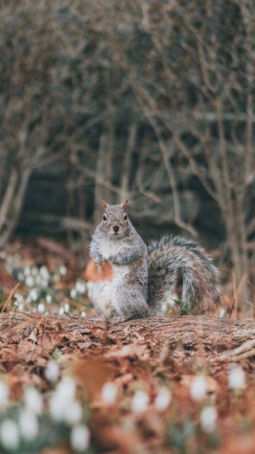 Brown and White Squirrel on Brown Dried Leaves