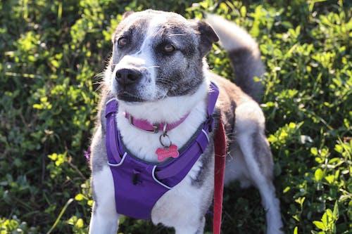 Free stock photo of cute dog, dog close up, dog lover, dog photography