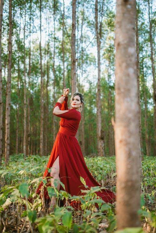 Foto d'estoc gratuïta de a l'aire lliure, adult, arbre