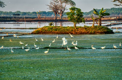 Common egrets on grass coast against sea in summer