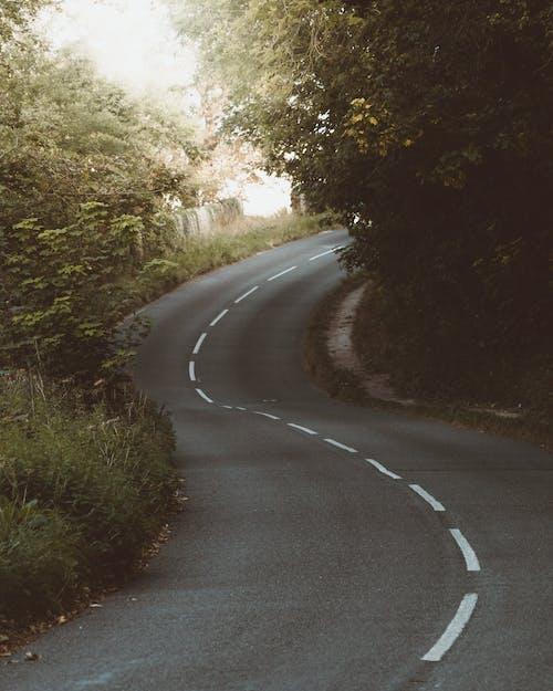 Asphalt road through dense green forest