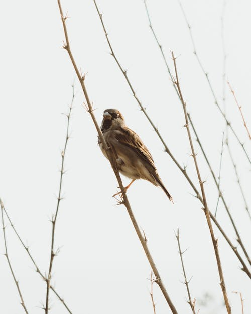 Low angle of bird with brown plumage sitting on leafless tree sprig against cloudless sky in nature in autumn time in forest outside
