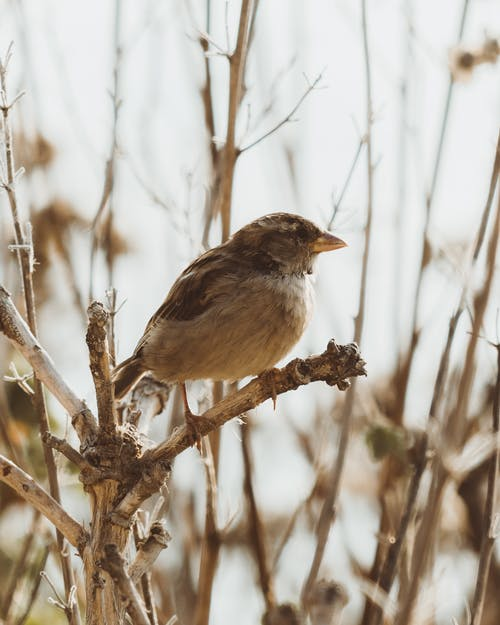Small bird with brown plumage sitting on leafless tree branch in autumn day in forest with blurred background in nature