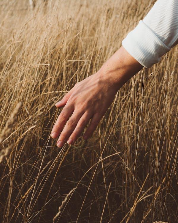 Pangkas Orang Di Rumput Kering