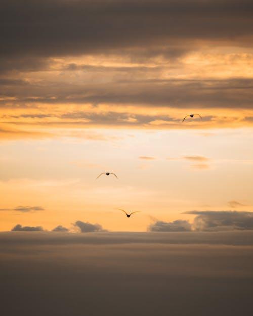 Birds flying in sunset sky