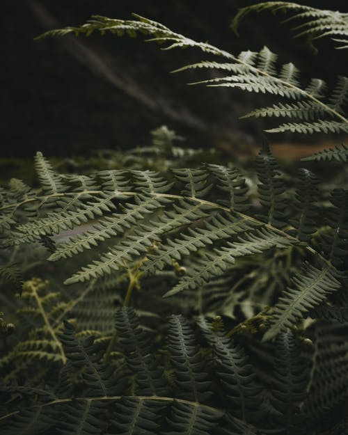 Green leaves of fern in forest