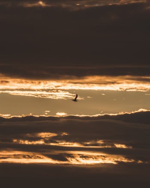Lonely bird flying in sunset sky