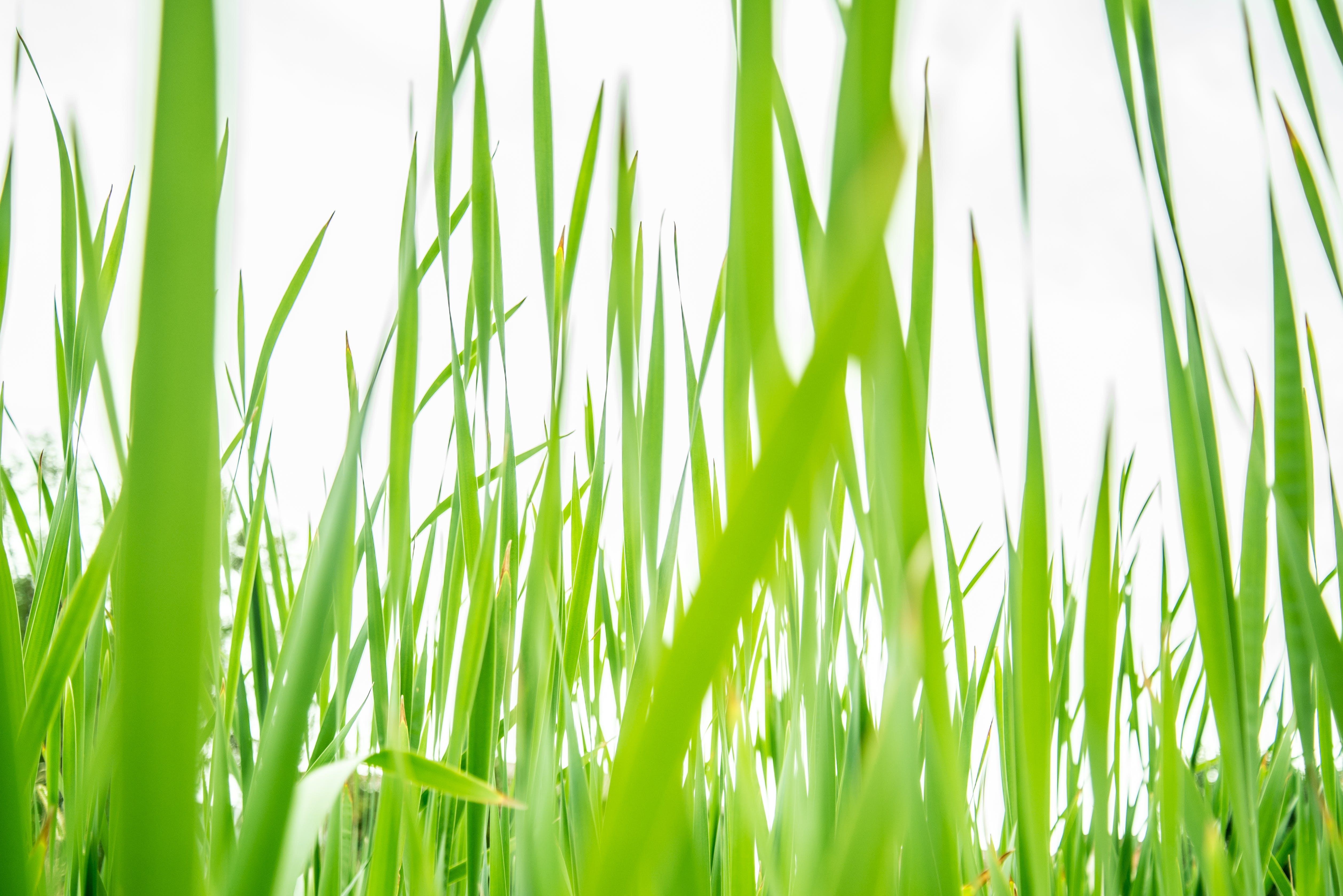Gratis lagerfoto af bane, close-up, græs, grøn