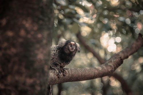 Photos gratuites de animal, animal sauvage, arbre