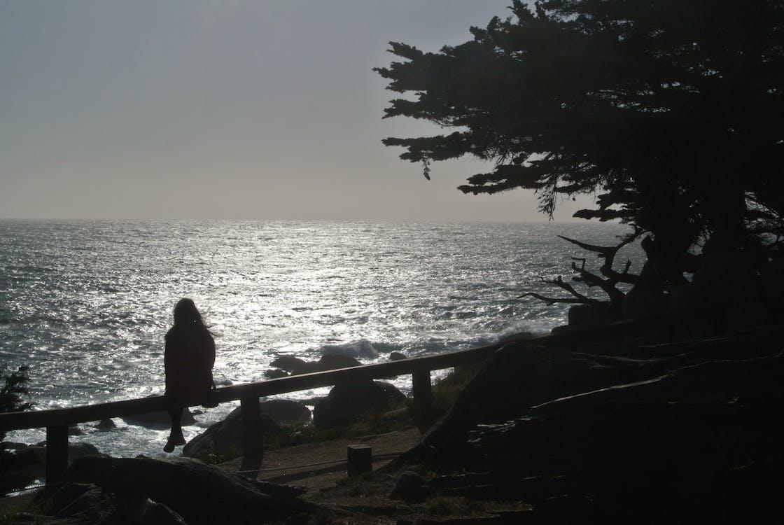 Photos gratuites de 17 mile, arbre et océan, coucher de soleil