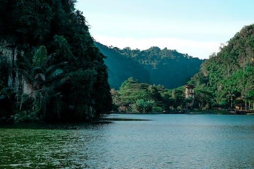 Foto d'estoc gratuïta de aigua, arbres, bosc, Fons de pantalla HD