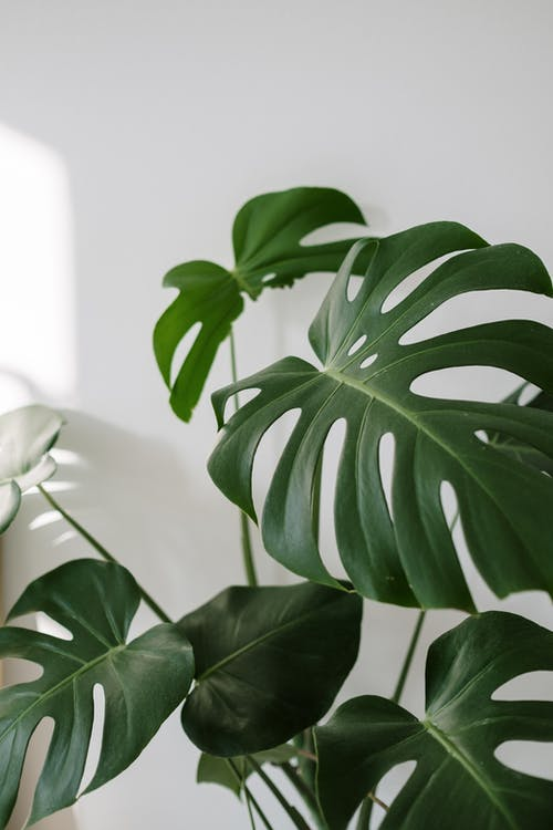 흰색 냄비에 녹색 식물
