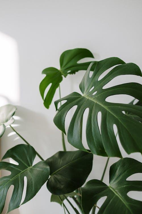 Green Plant Near White Wall