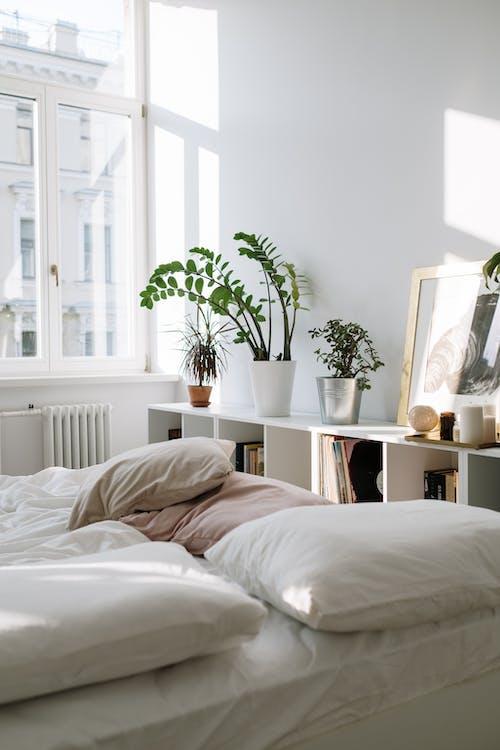 Green Plant on White Pot on White Bed