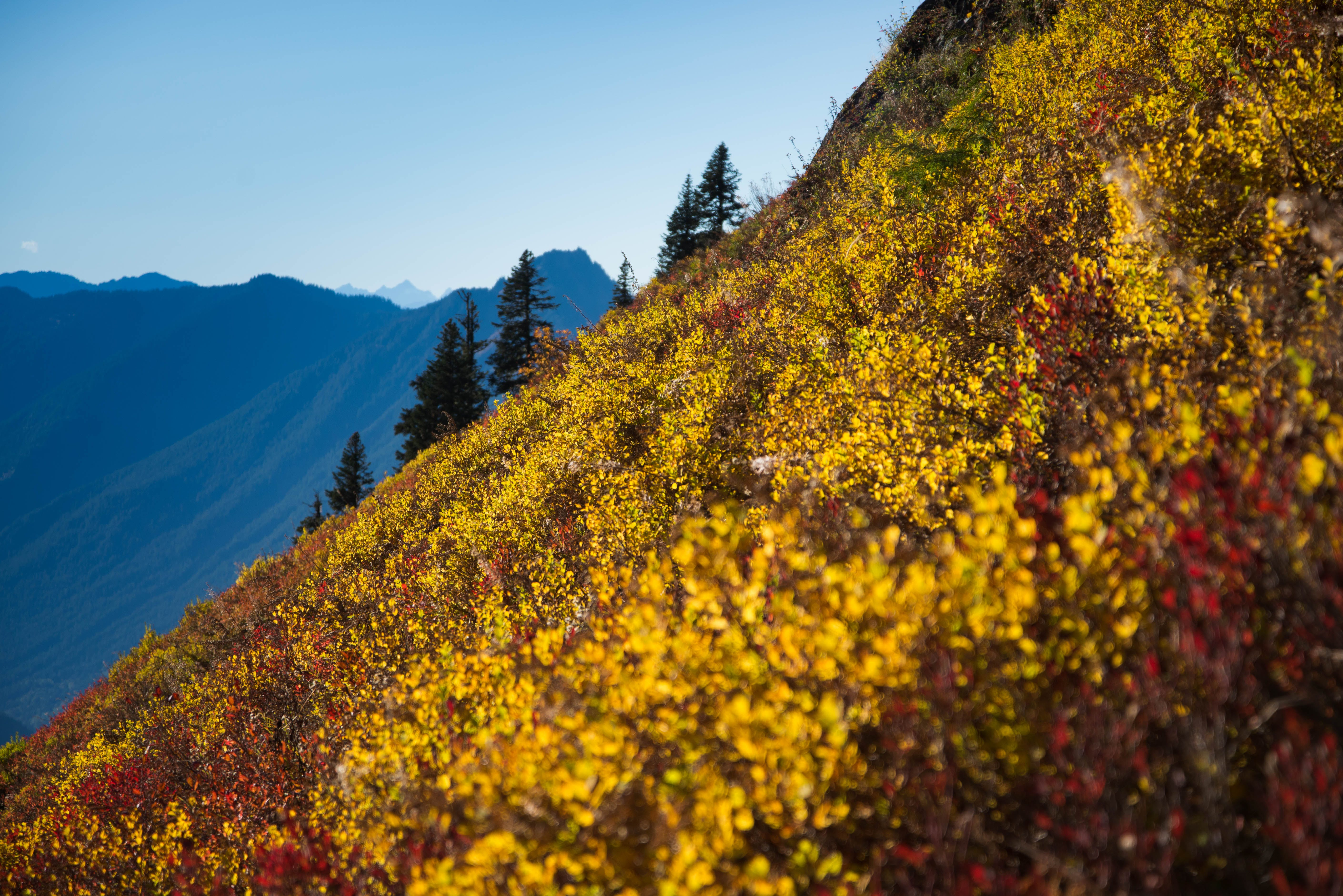 Free stock photo of autumn, fall colors, hiking, mountains
