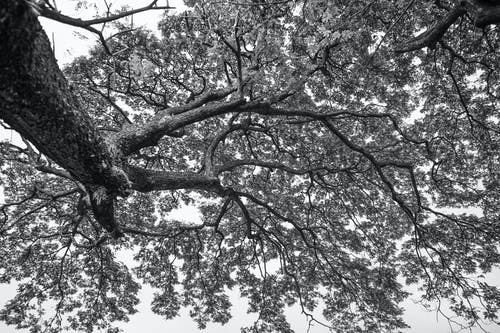 Grayscale Photo of a Tree