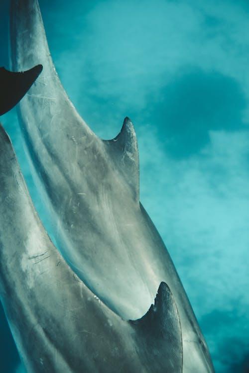 Gray Shark Under Blue Water