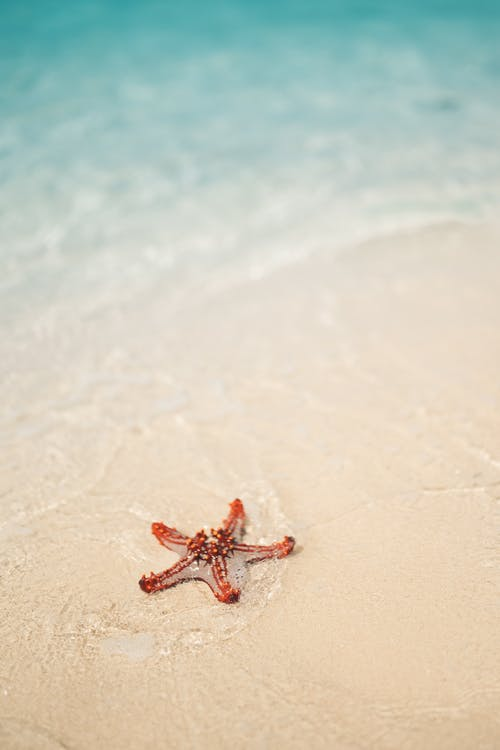 Close-Up Photo of a Starfish on the Shore