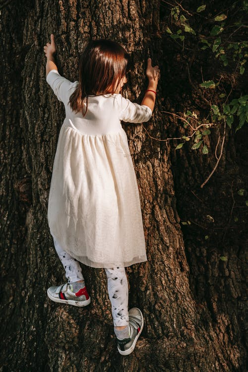 Back view of full body adorable little girl in white dress climbing trunk of tree in park