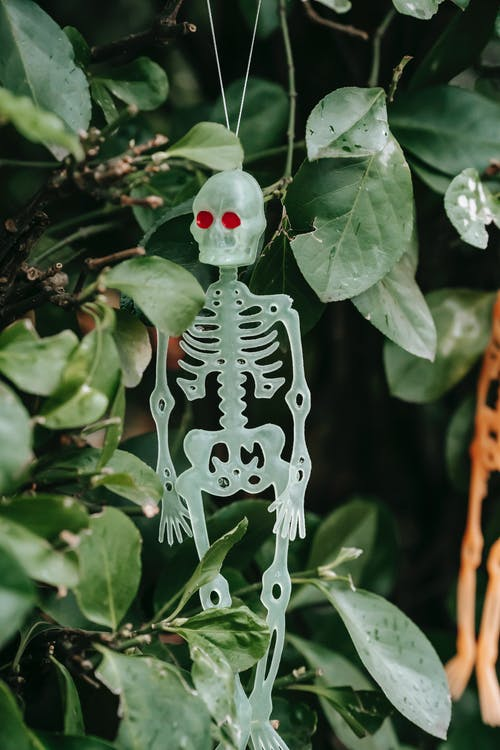 Skeleton with red eyes on twig of shrub in backyard for Halloween celebration