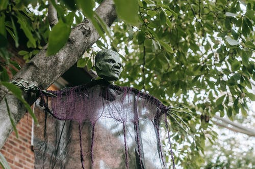 Low angle of green tree with creepy skeleton figure in Frankenstein mask hanging on branches near house in Halloween