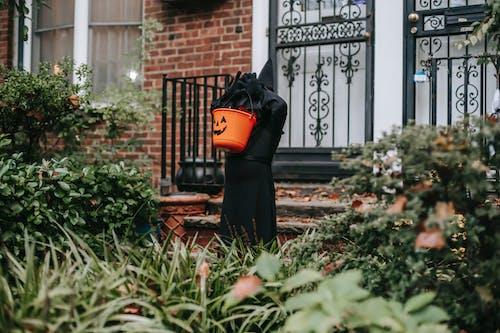 Gratis stockfoto met 31 oktober, bedacht, buitenkant, buitenshuis