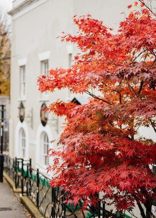 Δωρεάν στοκ φωτογραφιών με δέντρο, έξω, εξωτερικός χώρος, εποχή