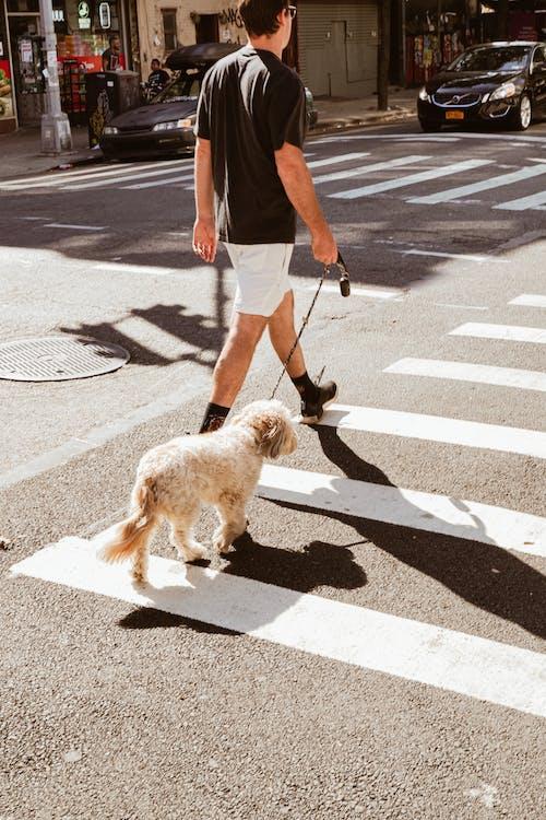 Kostenloses Stock Foto zu asphalt, bewegung, bürgersteig